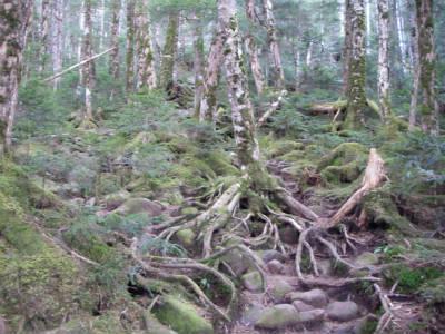 丸山登りの樹林帯