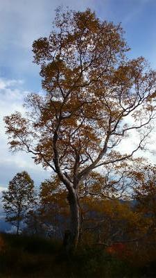 非常に気になる木