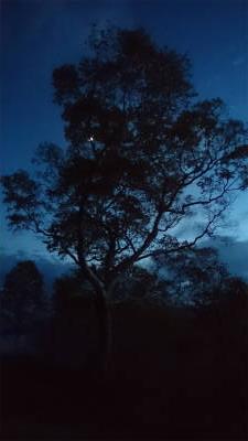 月夜に浮かぶ気になる木