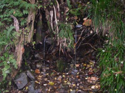 補導所横の水場