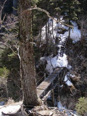 屏風岩を過ぎると大きな木の橋がある。