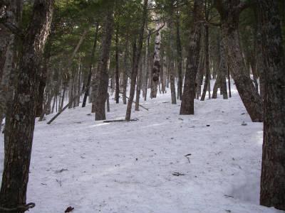 樹林帯の斜面を登ってゆく。
