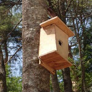 端材で巣箱を作る