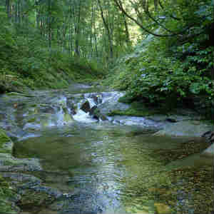 白神山地 暗門の滝から西股沢を遡行する