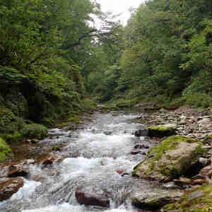 白神山地 赤石ダムから赤石川を遡行する(二股手前まで)